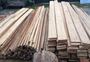 Tangkap Pelaku Ilegal Logging