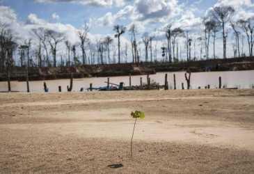 Saudi Ancam Denda Rp113 M bagi Penebang Pohon Sembarangan