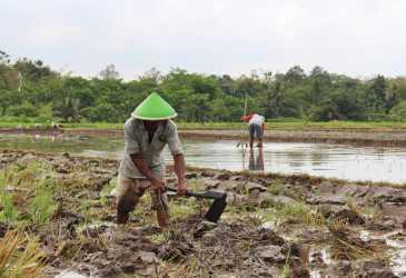 Masyarakat Agara Pesimis untuk Bertani Tahun Ini